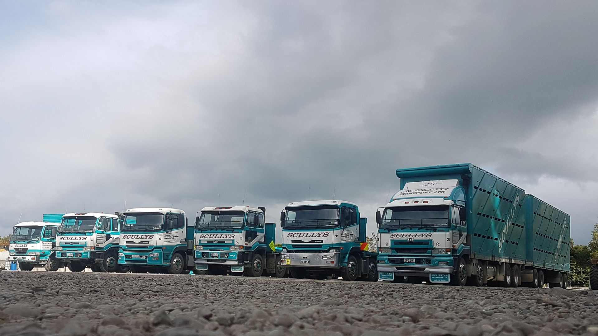 Scullys Transport truck line up.